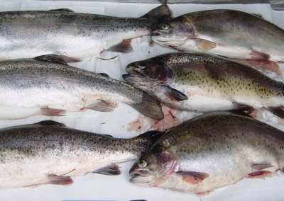 Fig 1 Examples of skeletal deformity for rainbow trout